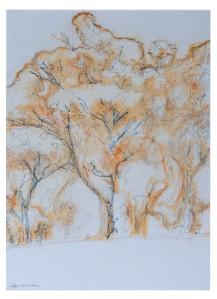 11 Soft tree sketch