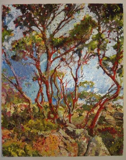 Trees on Mount Wellington, Tasmania